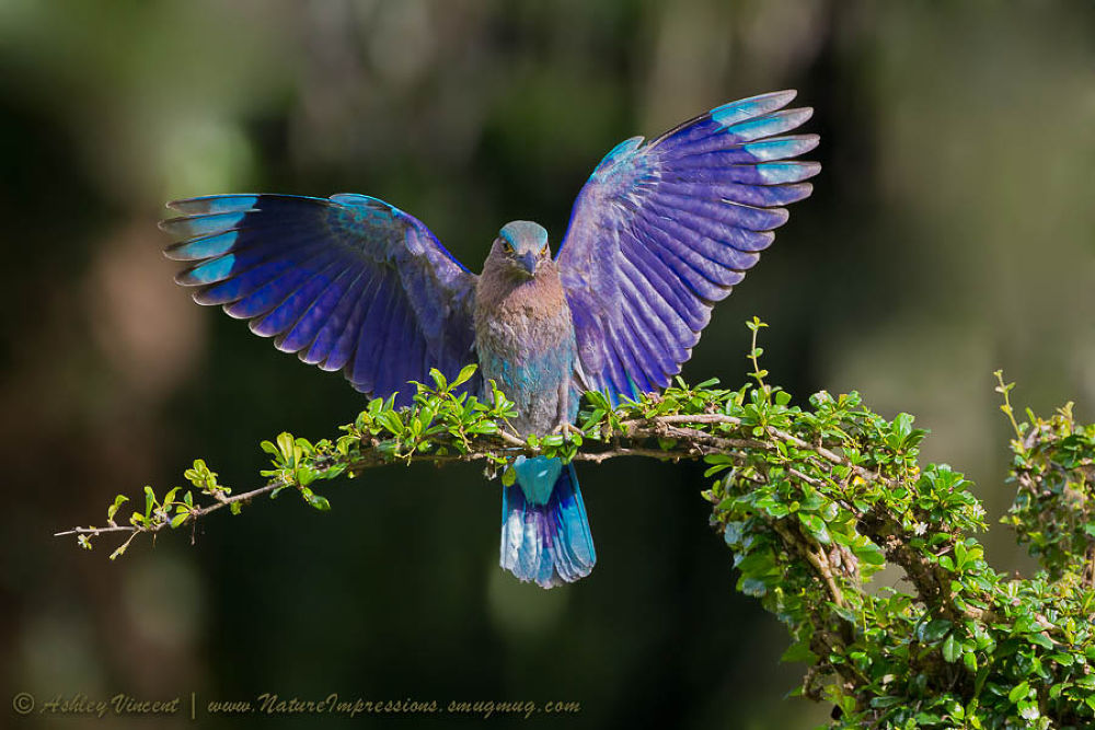 Perfect Landing by ashleyvincent566