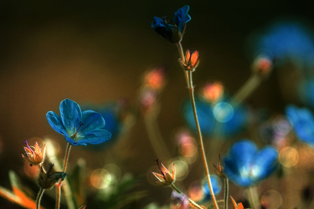 Blue Dream by delphdevos