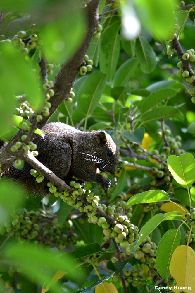 松鼠 by wwwdanny