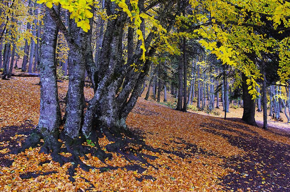 Autumn Leaves by Mehmet Gokyigit