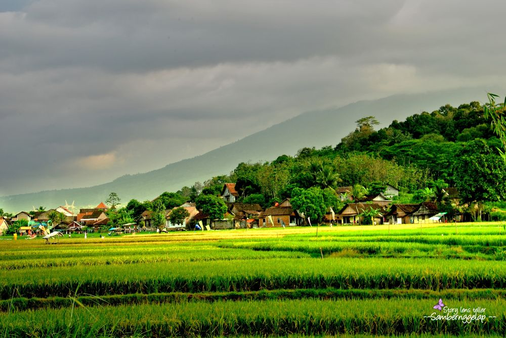 paddys...village..forest..mountain by bangmosz