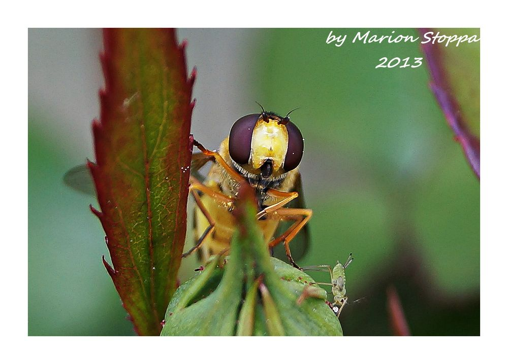 Insect by marionstoppa