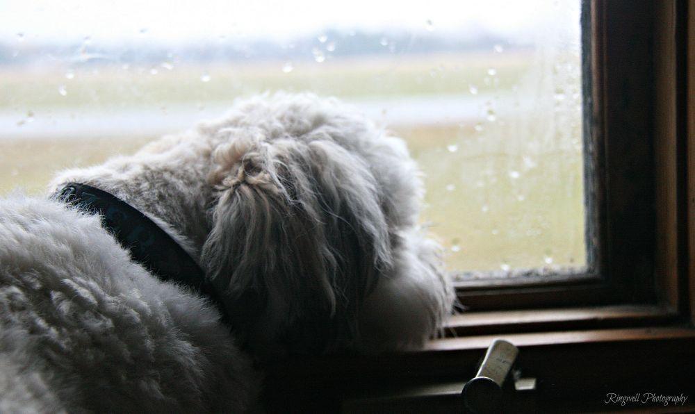 Rainy Day by Marissa Sue Ringwell