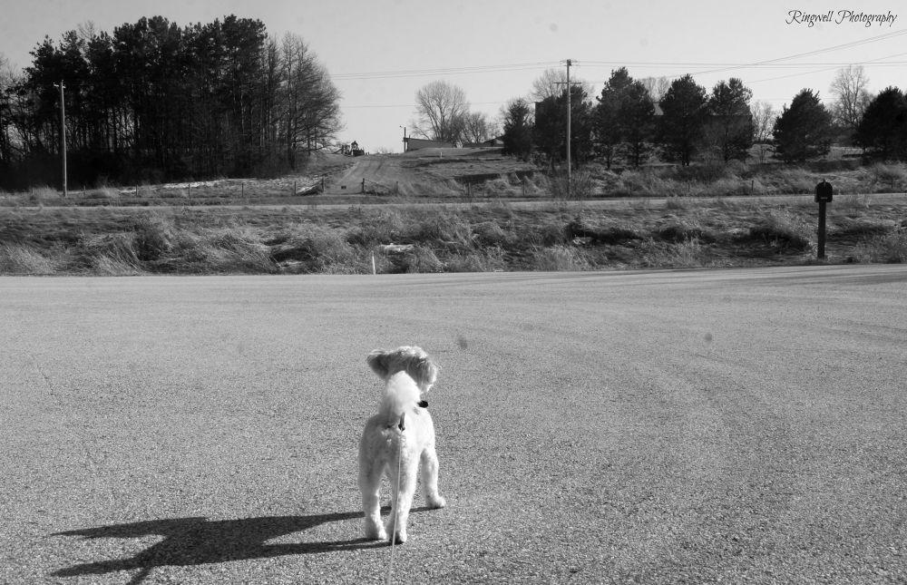 Morning Walk by Marissa Sue Ringwell