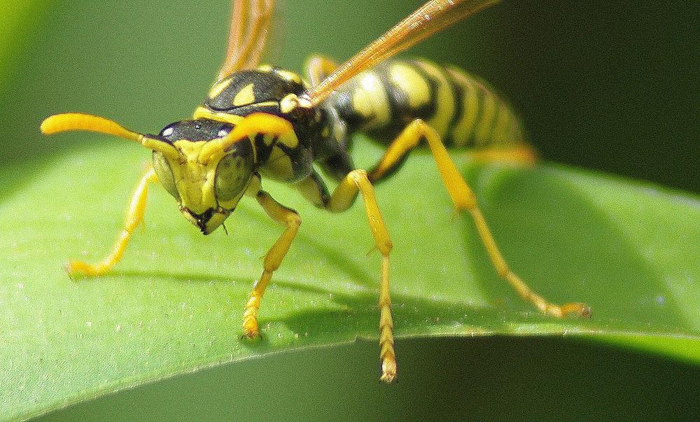 Photo in Macro #macro #bee #insecte #closeup #nature