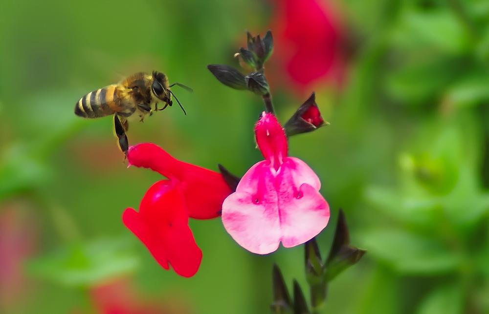 Photo in Macro #bee #macro #nature