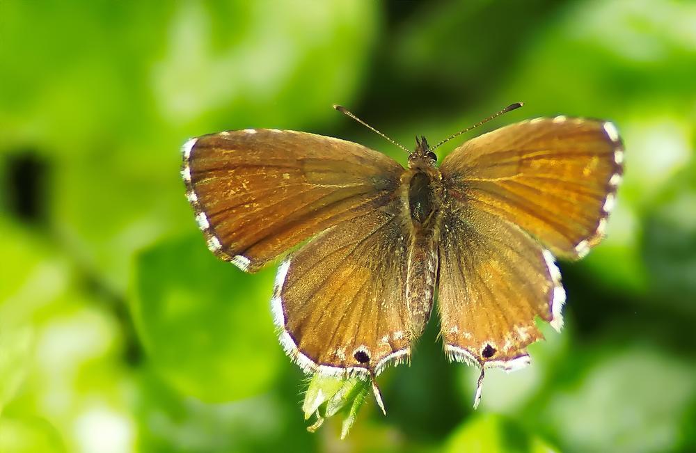 Photo in Macro #nature #macro #papillon #butterfly