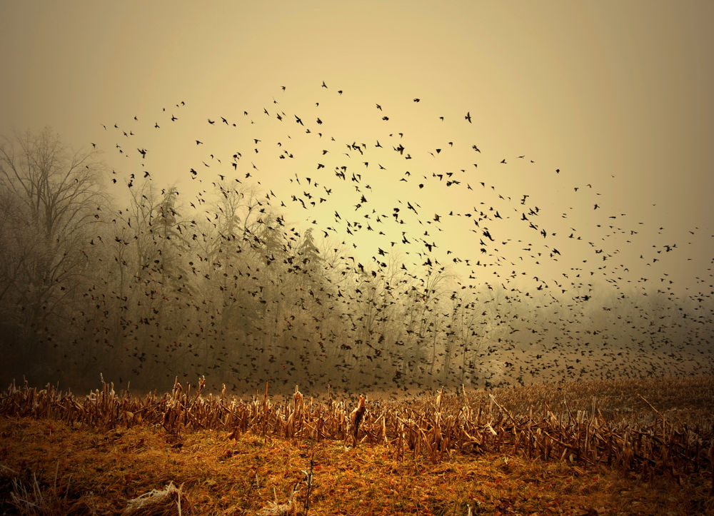 Birds! by marksorr