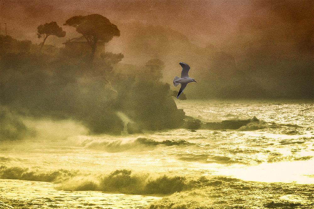 tempesta sulla costa  by sunrisesunset