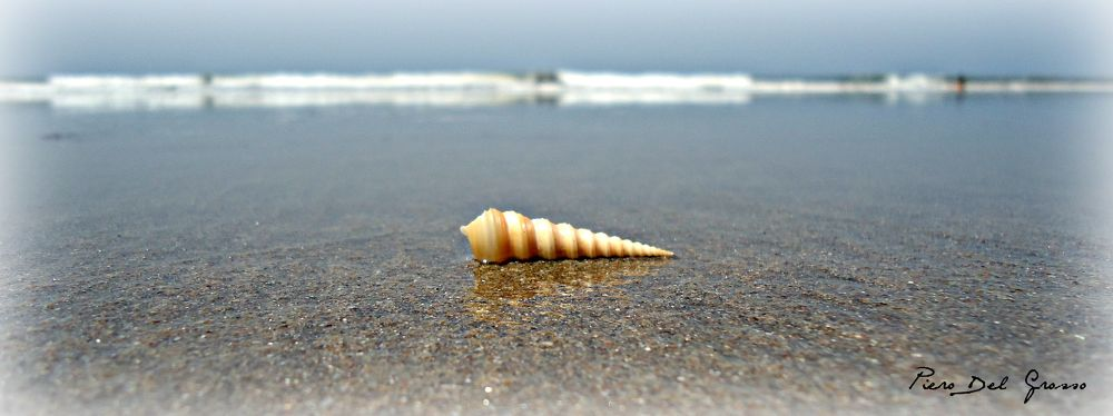 Shell On The Beach by Piero Del Grosso