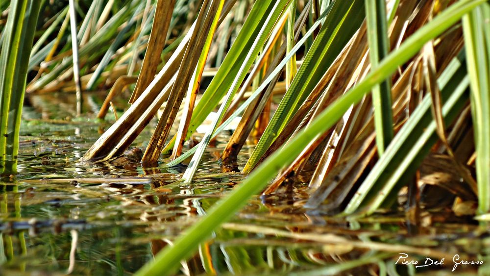 Plants of the Source - River Pescara Italy by Piero Del Grosso