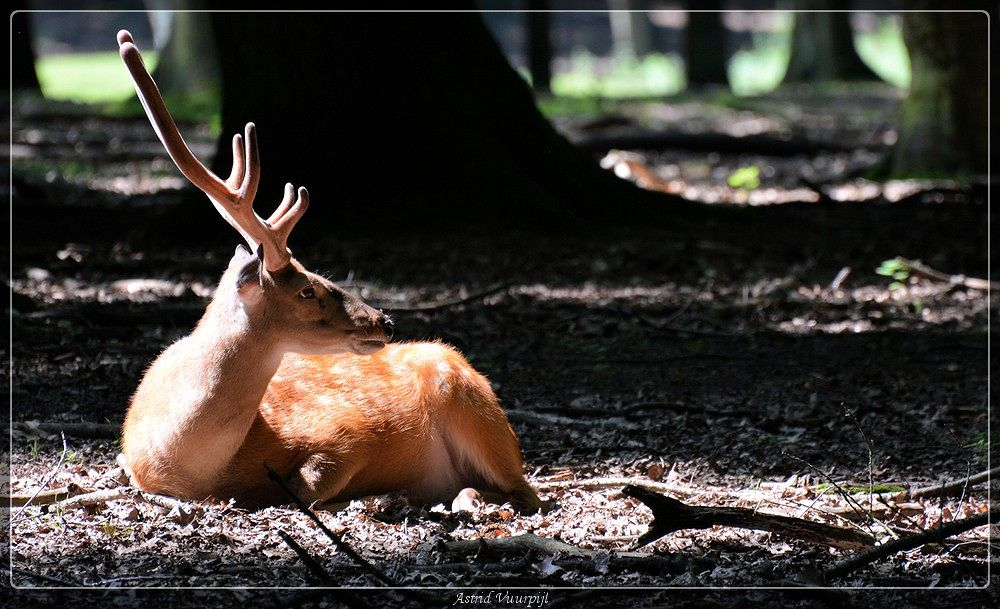 Photo in Animal #wildpark gangelt