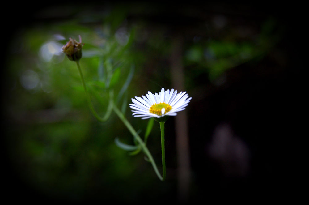 flower by sframes photography