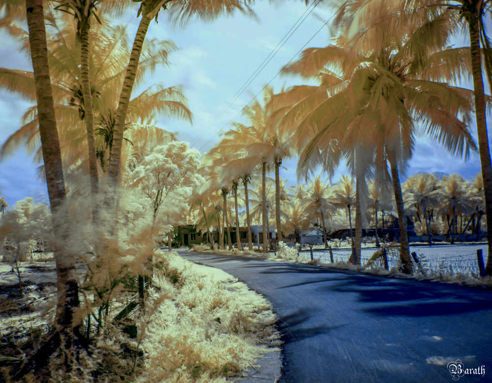 Photo in Nature #infrared #nature #colour