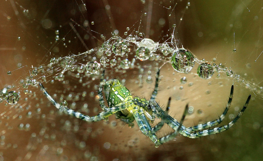 Spider and dew by dwiantowidjisaksono
