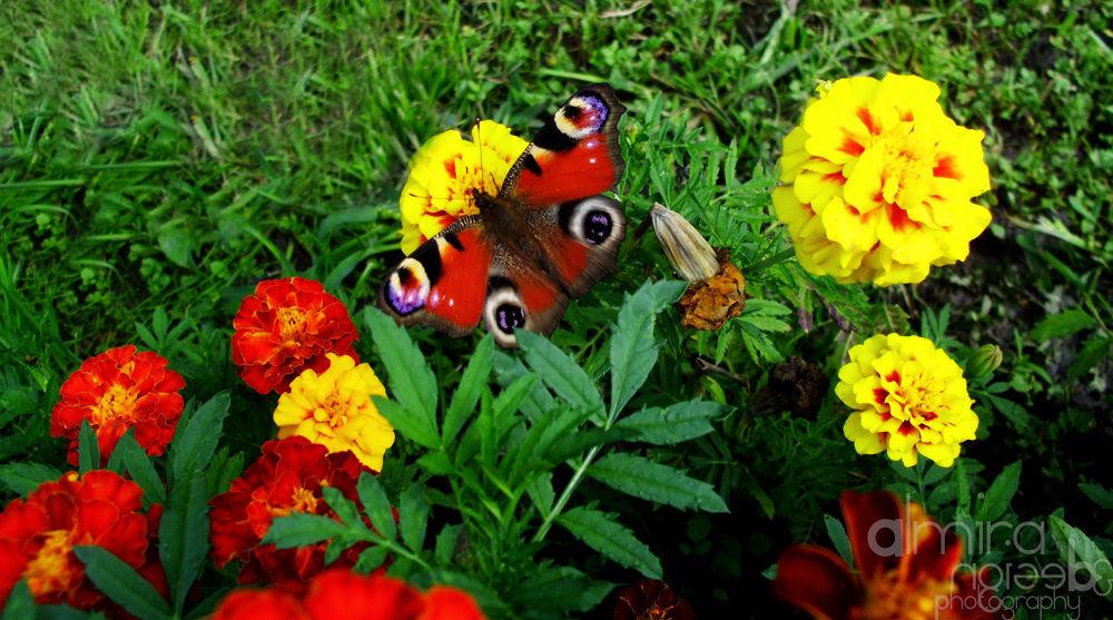 Summer Colours by alexandrachicos