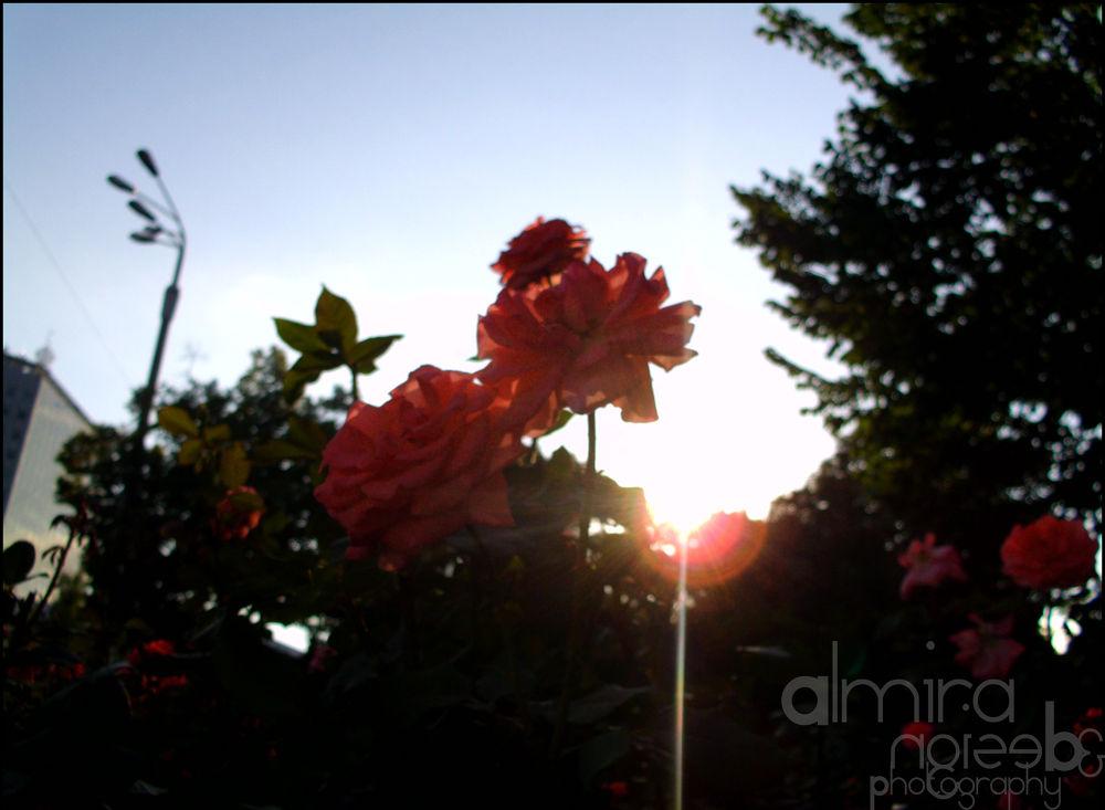 Summer Bloom by alexandrachicos