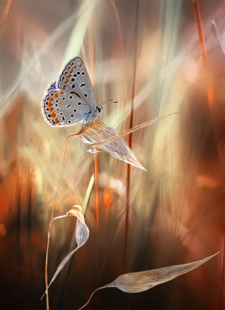 Photo in Macro #macro #insect #animal #butterfly