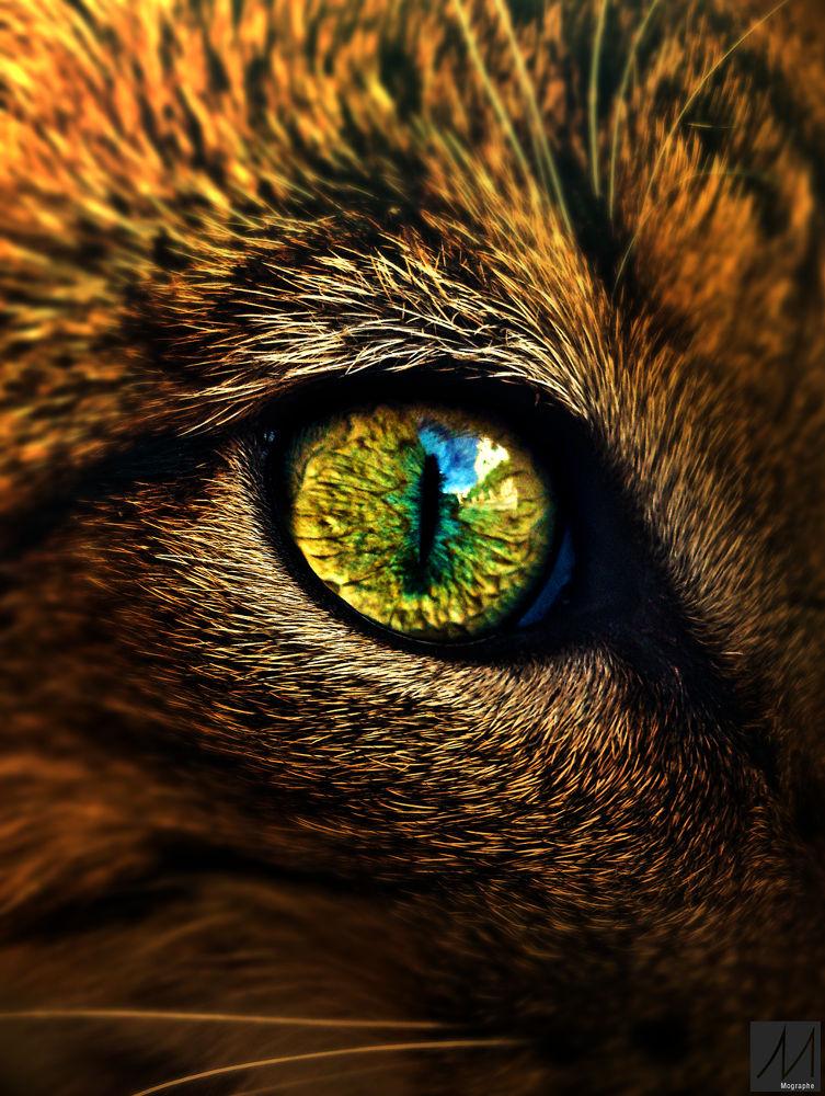 the cat's eye by Moussa Idrissi-MOGRAPHE