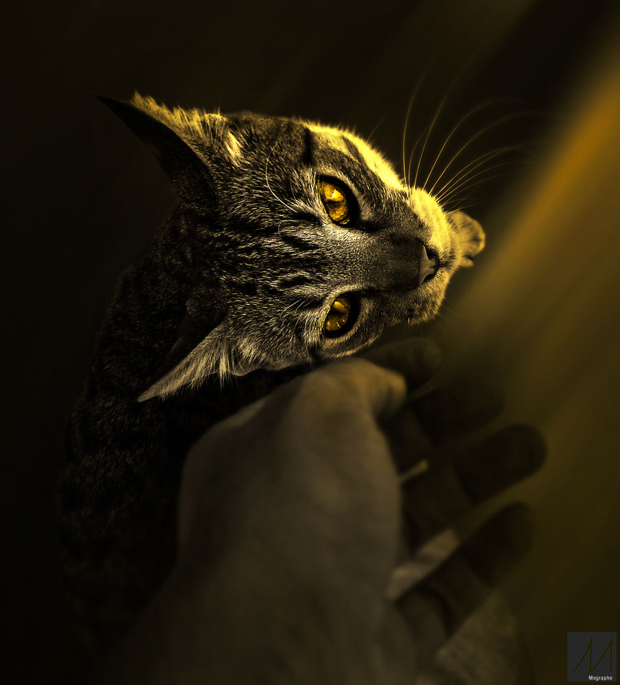 Focus and my hand  by Moussa Idrissi-MOGRAPHE