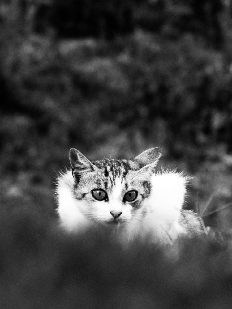 wild by Boban Milojevic
