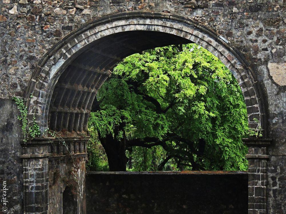 Photo in Architecture #window to green #window #green #fort #vasai fort #vasai killa #vasai #architecture #heritage #history #tree #leaves #greens #fine art #art #fine #stones #walls #wall