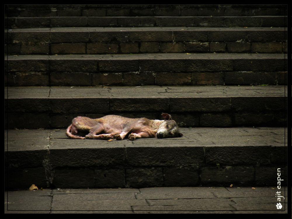 Hunger by Ajit Eapen