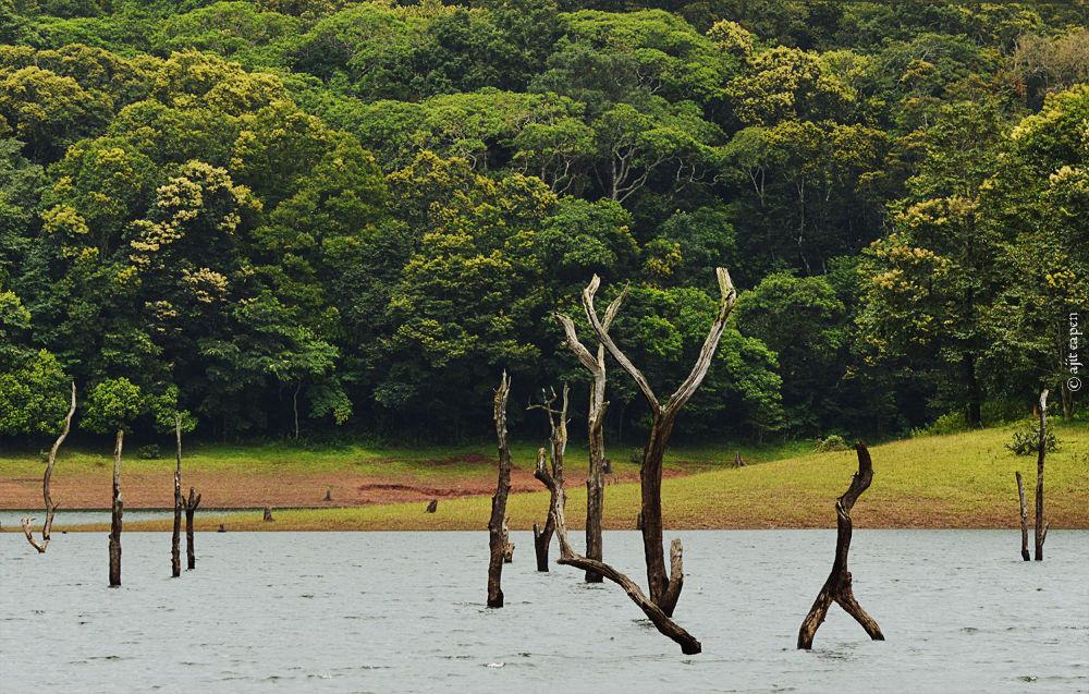 Photo in Random #living martyrs #nature #landscape #jungle #wild #kerala #india #dam #development #green #dead trees #trees #flora #rural #tourism #industry #fine art #fineart #ajit eapen #footloose #travel kerala