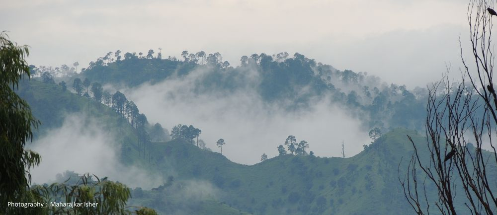 DSCN6446 Forest by maharajkar.isher
