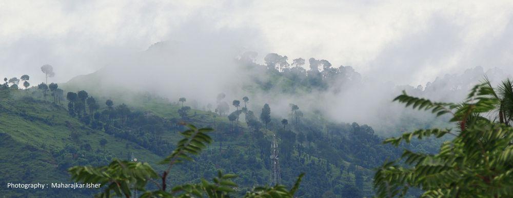 DSCN6444  Forest Mist by maharajkar.isher