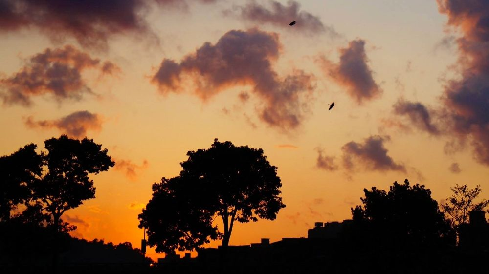 The trees, the birds and the sunset by zengzeng777