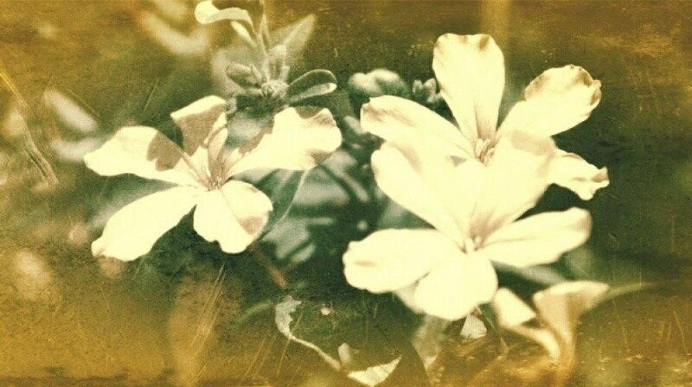 flowers, Ba Li by zengzeng777