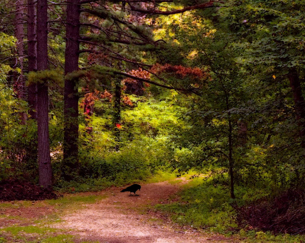 Photo in Random #landscape #bird
