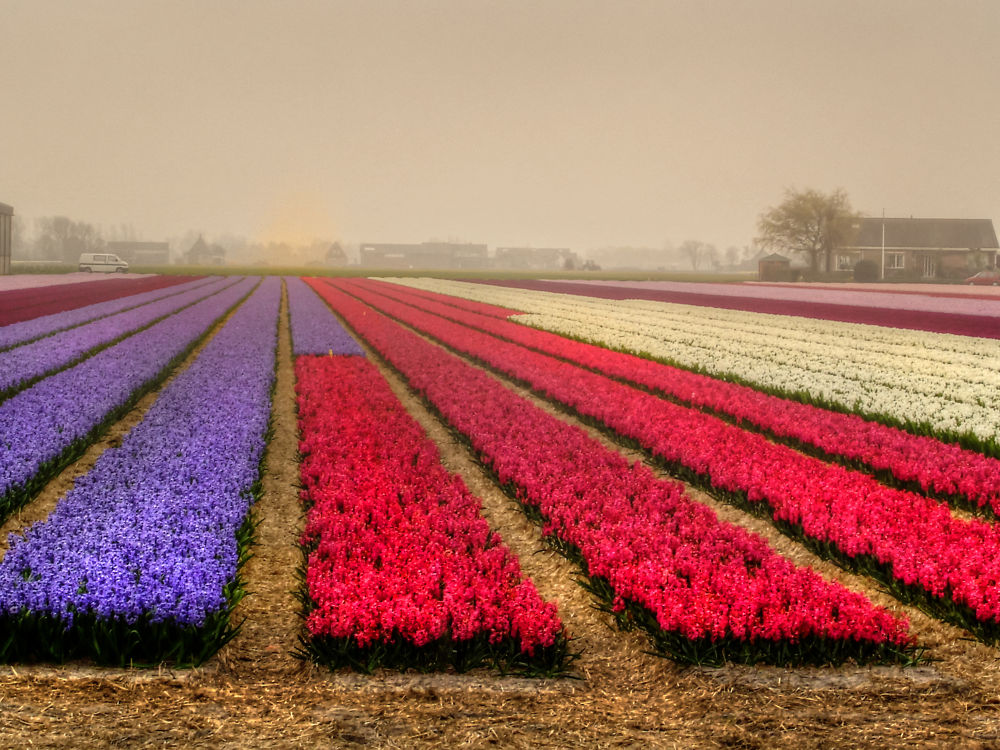 Holland by silvestro cappellini