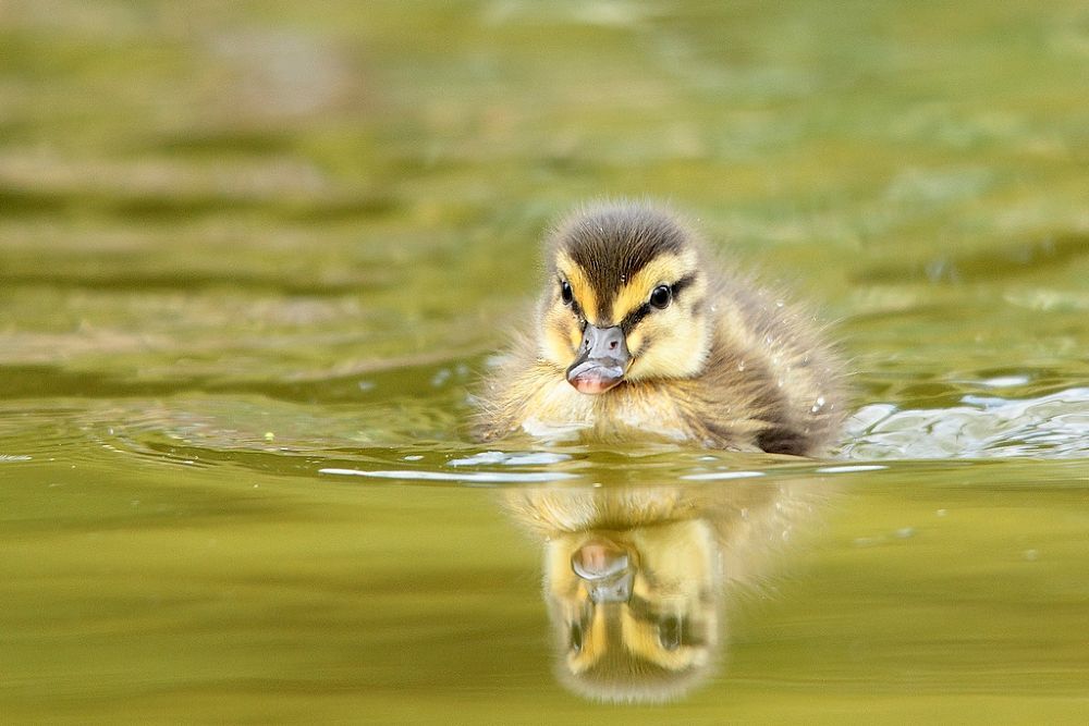 new born by wisephotographie
