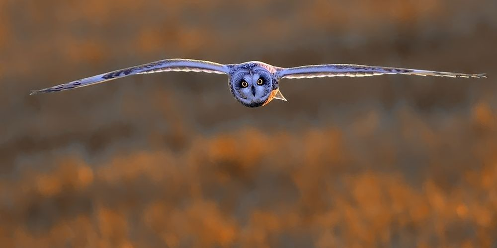 look me in my eyes !!! by wisephotographie
