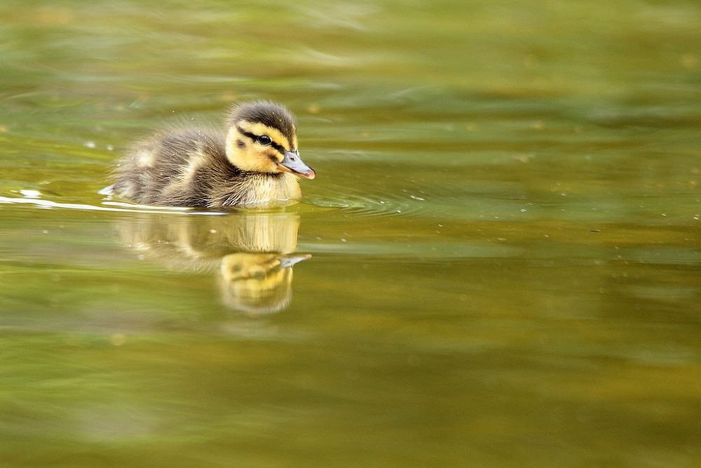 the next generation by wisephotographie