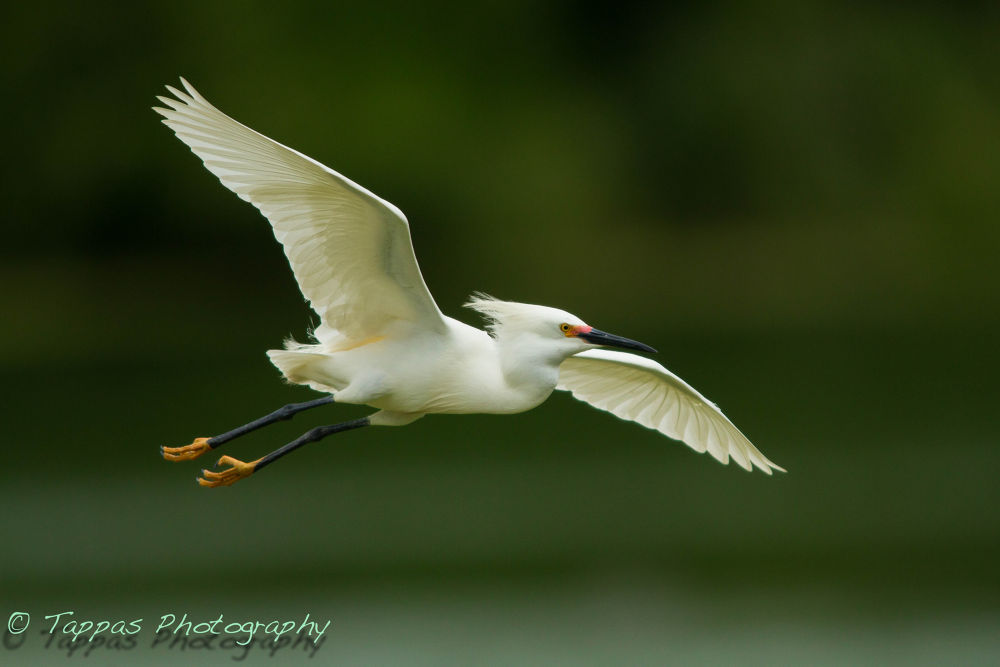 Coming in to the nest by Gary Truchelut