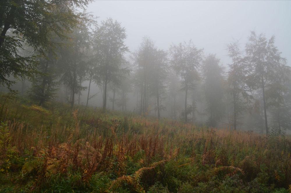 Misty Woodland by alanbritton33