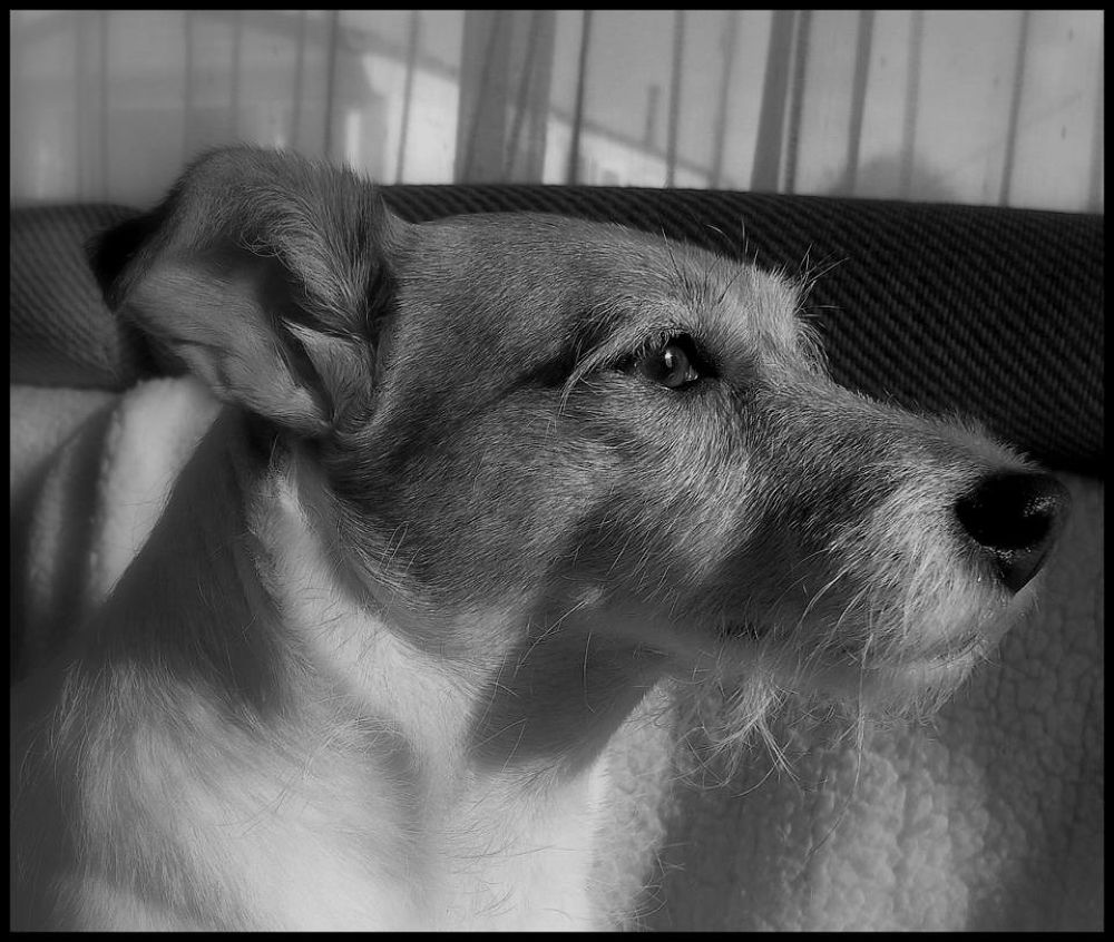 Dottie, sad girl just lost her Sister, missing Molly by Paul Anthony White