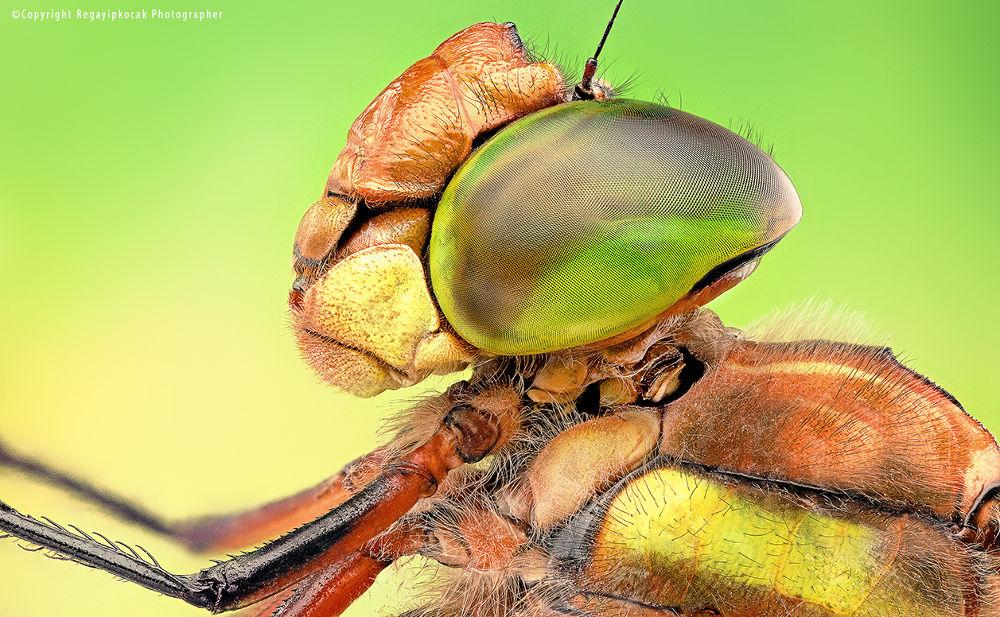 Dragon Fly by regayipkocak