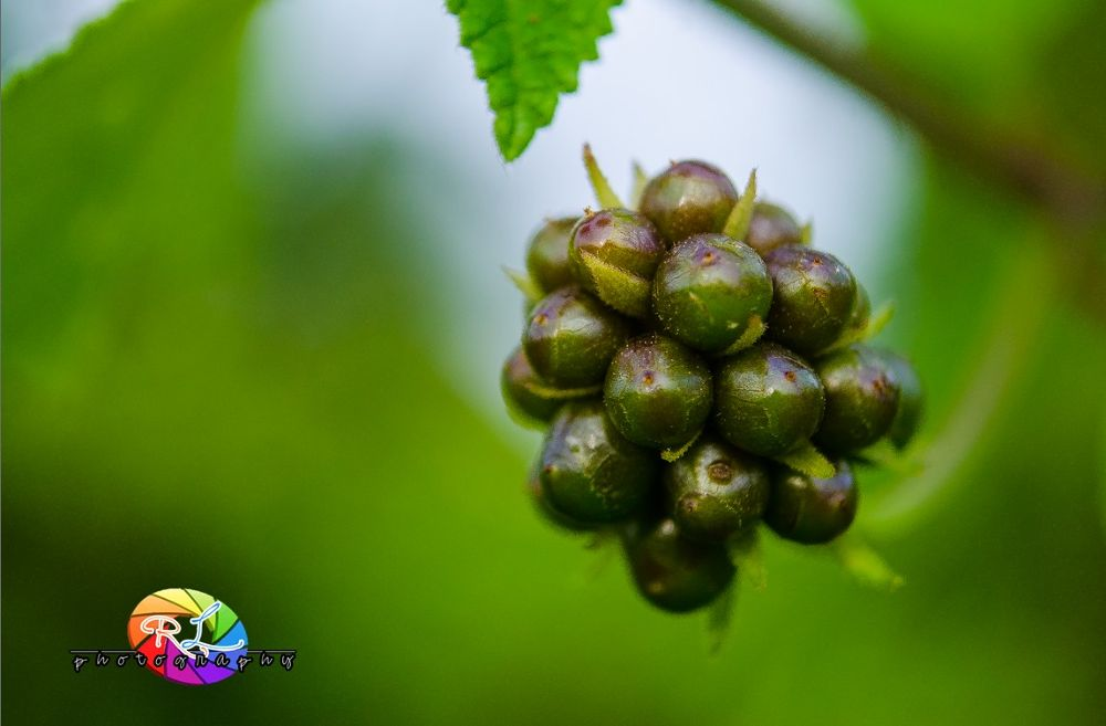 wildflowerfruit by yourchancenow