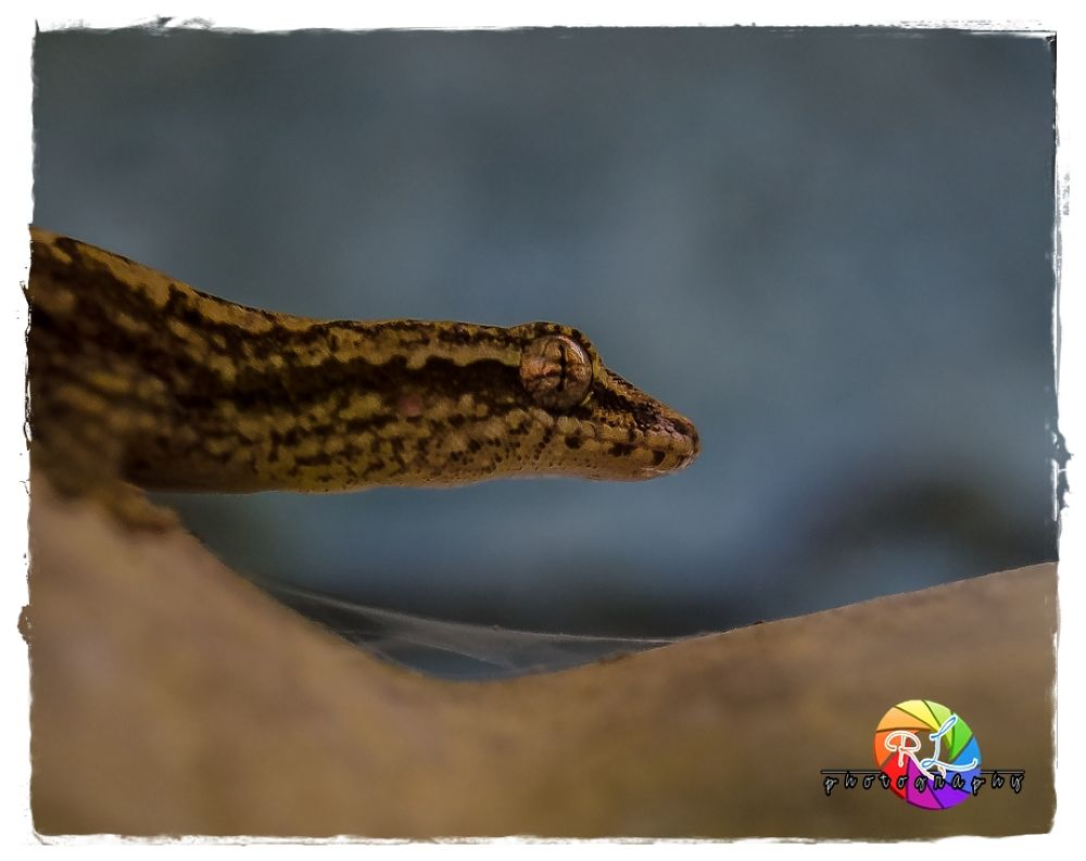 lizards by yourchancenow