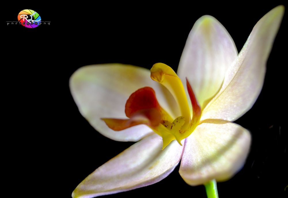 ORCHID by yourchancenow