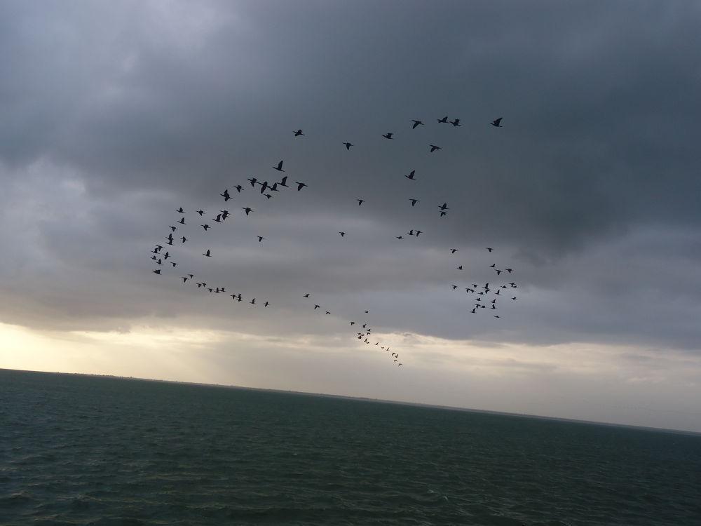 """""""Migrating Birds"""" by krishnanraman1460"""