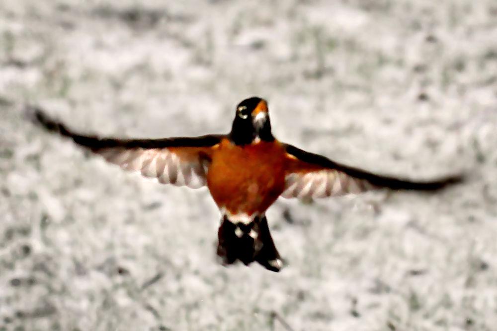 bird-a-blur by ginalouisenelson