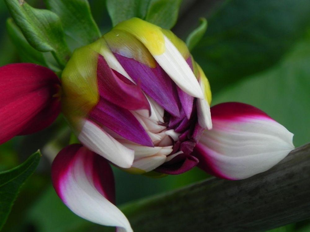 violet by ninalautenschlager1