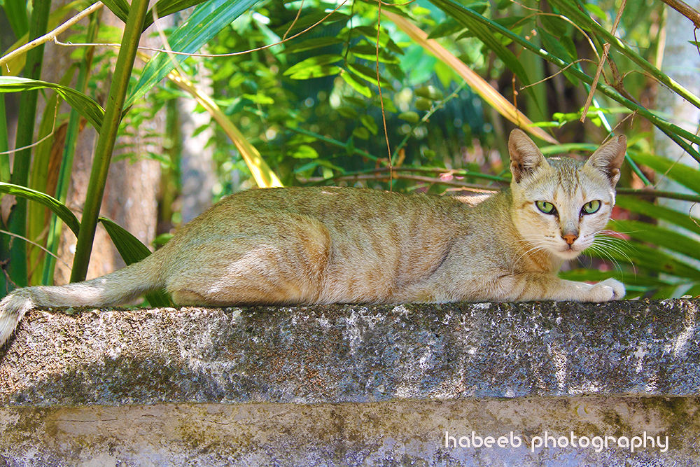 Catter!!! by HABEEB RAHMAN