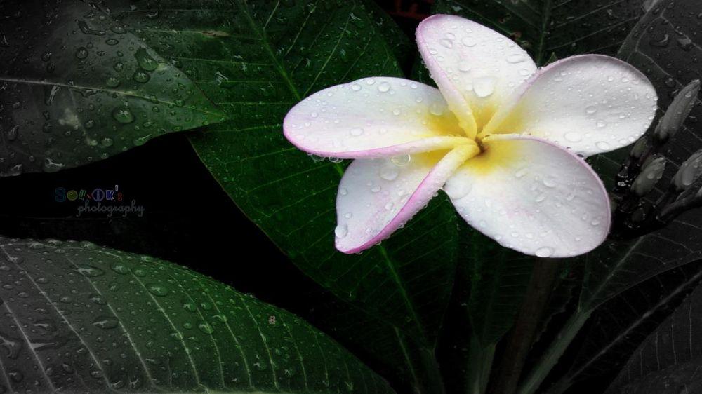 Beauty of Monsoon by Shubhadeyroy