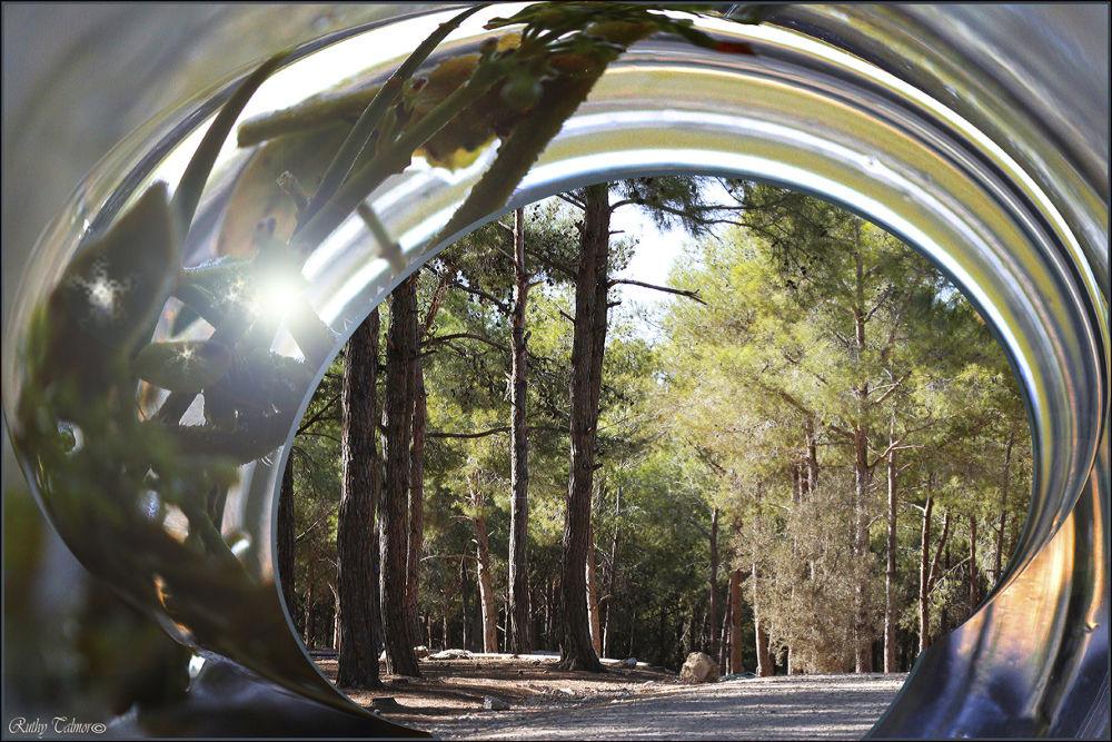 יער עופר 3עא by ruthytalmor